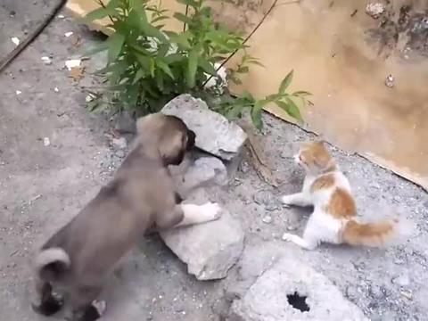 小坎高很好动也好斗,总是跟小猫过不去