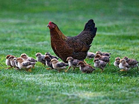 10月即将来临,生肖鸡看看你的大贵人是谁?助你青云直上请珍惜