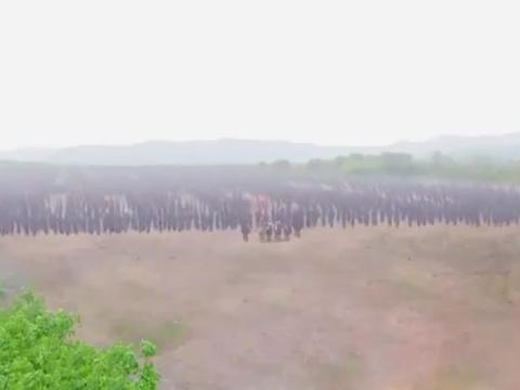 大唐与西凉开战为什么不见薛丁山?杨藩也太狂了!