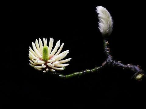 下个月,月老牵姻缘线,桃花朵朵开,爱情降临怦然心动的4大生肖