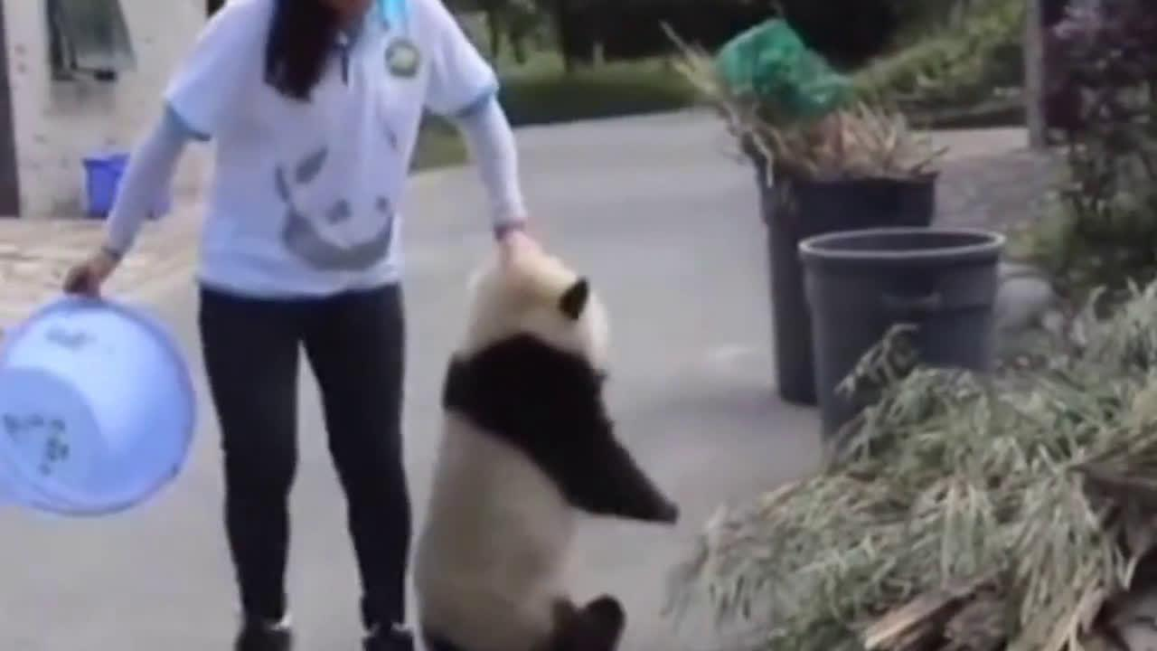 熊猫:我沉?能这么拎我已经是你的荣幸了,后面已经排大队了