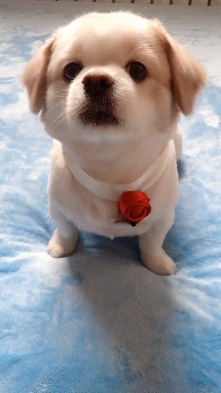 这狗子是草莓味儿吧,简直太甜了