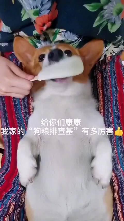 小柯:狗粮?呸!这辈子都不可能吃狗粮