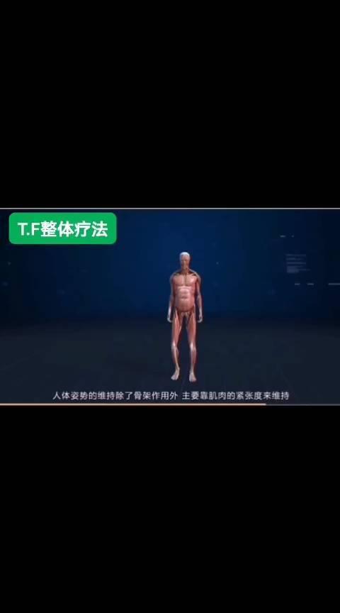 人体维持姿势, 除了骨骼、筋膜,还有骨骼肌的力量