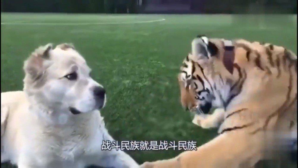 网友:能不能给点森林之王面子