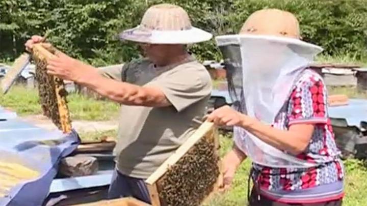 黑龙江原始森林养蜂人:守住国家的蜜蜂基因库,守护自然的馈赠