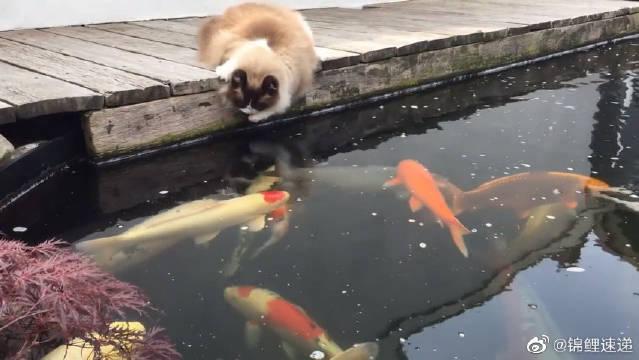 猫:我就看看,我不吃。这互动真的太可爱了