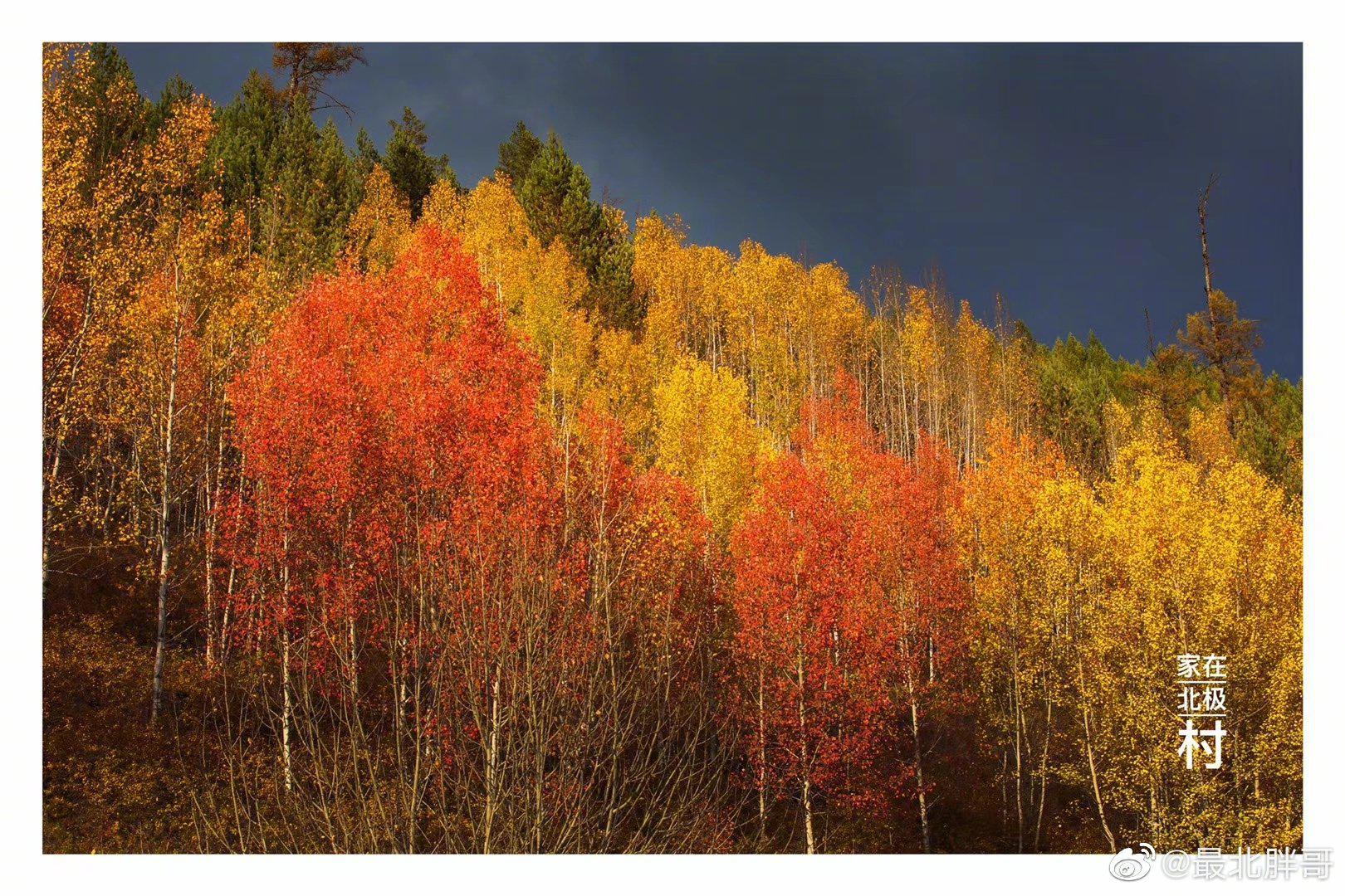 此刻的大兴安岭,万山红遍,层林尽染🍁