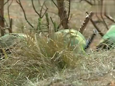 许三多参加野外生存,不吃口粮,甘愿在荒地里啃鱼腥草