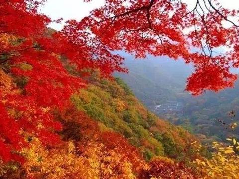 秋季来临,太原崛围山景区,红叶如一身轻纱般的红装,还免门票