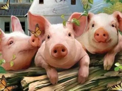 中秋国庆双节将至,猪肉价格会降到20元以内吗?