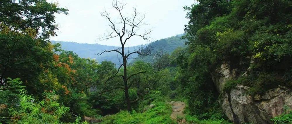 女子山中失联!400人次救援,4天后在树杈上被发现!她经历了什么?