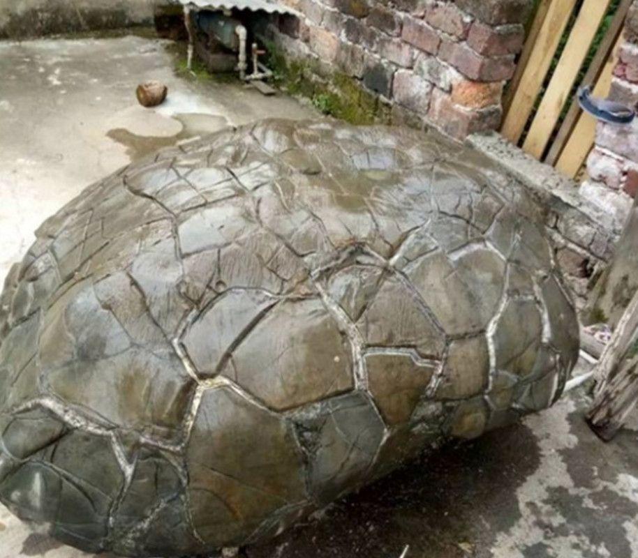 老大爷捡回罕见奇石,样子像个巨龟,表面还有很多奇特的纹路
