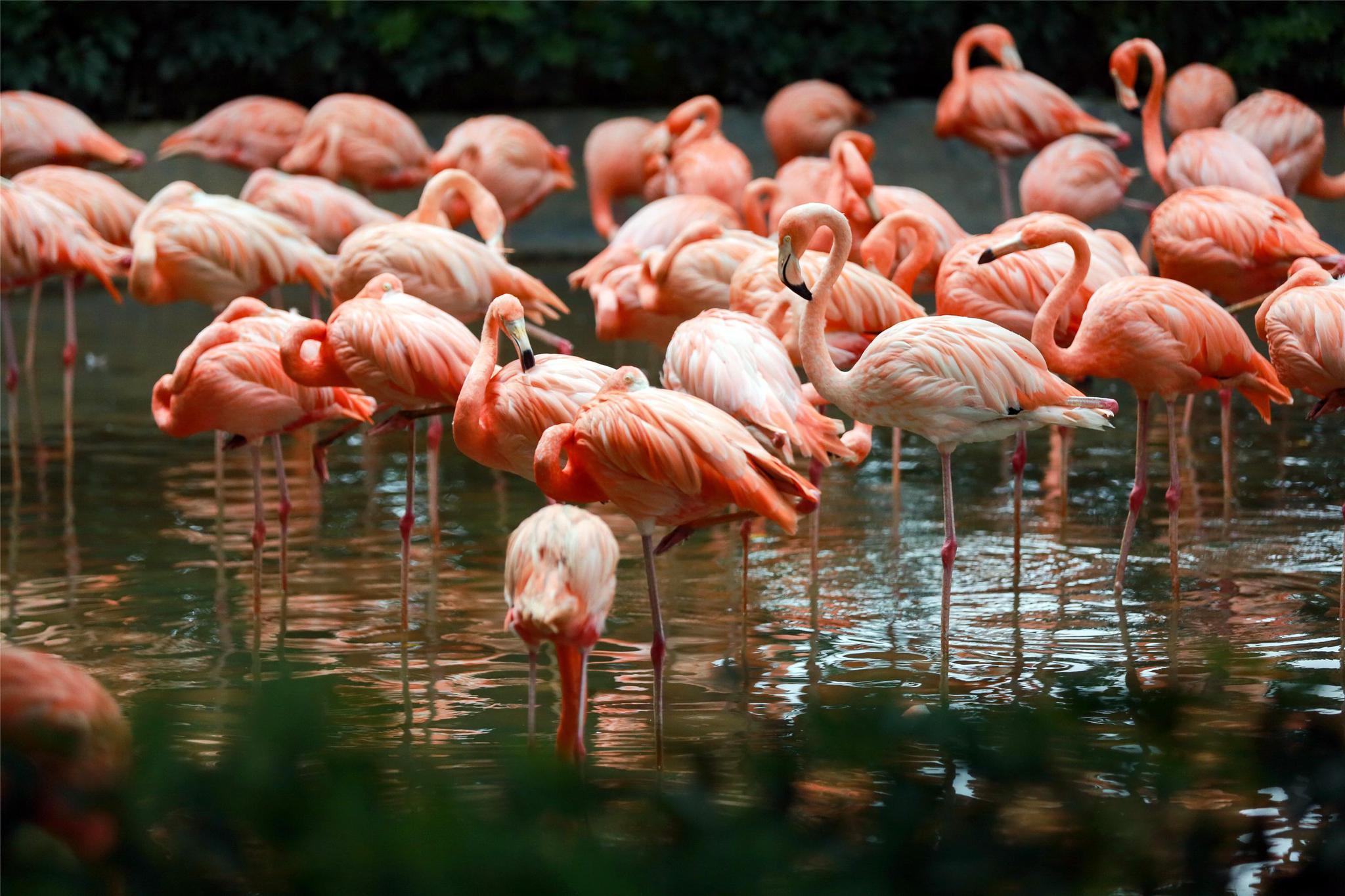 秋季观鸟时 肇庆星湖湿地公园有成千上万只鸟