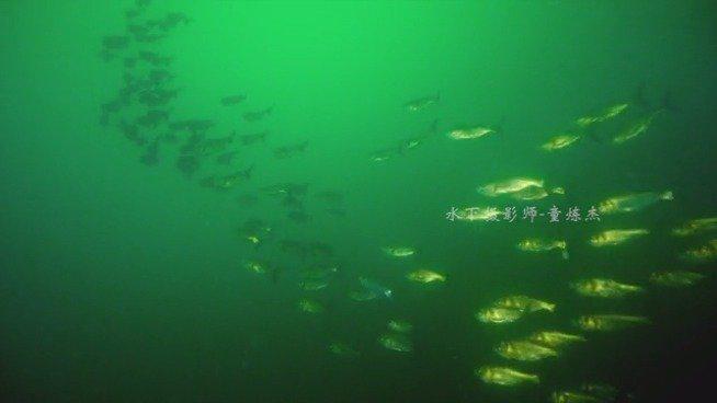 首次曝光!胖头鱼风暴来袭,你看不到的风景,就在千岛湖水下!