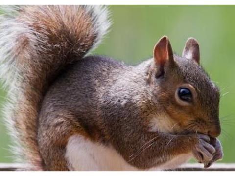 属鼠人别不知道,你生日数字相加得到的尾数,就是你一生宿命!