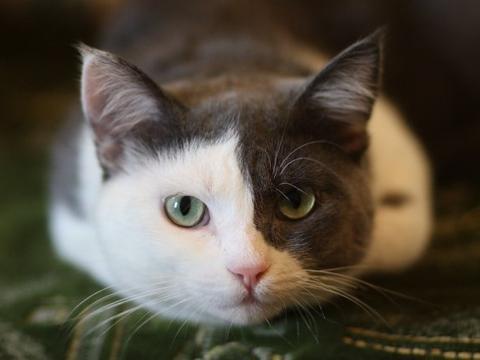 猫咪骨折常见的5个部位,各位铲屎官需要注意