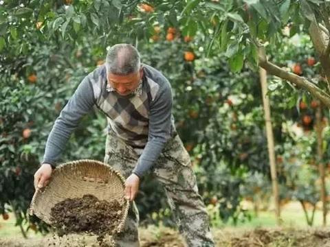 种植户朋友:粪肥伤根又落果,别再用了!