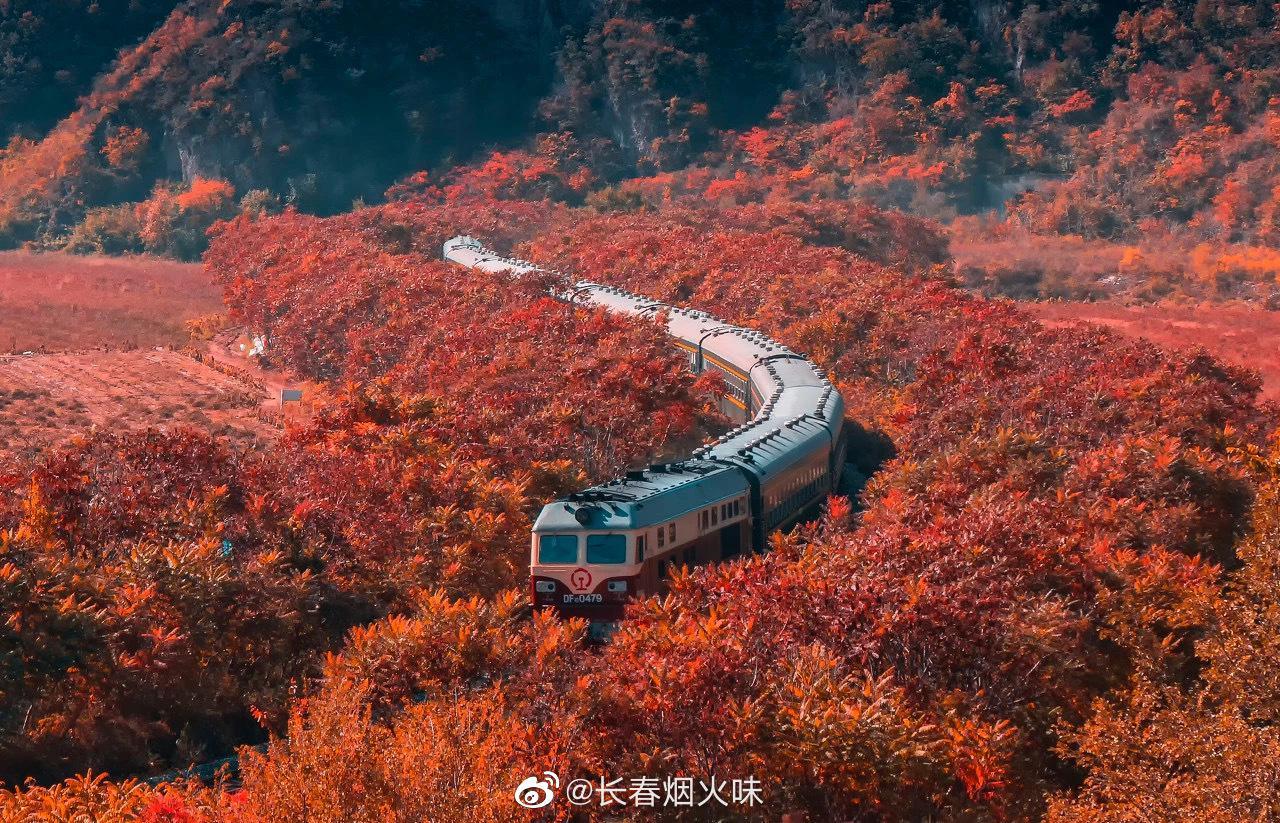关门山的枫叶和香山的比,规模更大,数量更多!