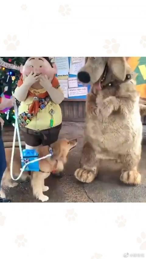 """狗狗Henry在迪士尼见到了动画里的""""爱豆""""……"""