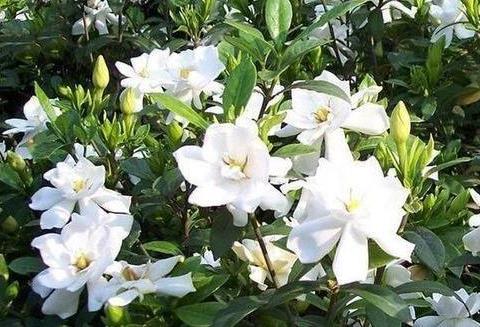 阳台再小也必须养的4种花,一年开花300天,层层交叠,烂漫迷人眼