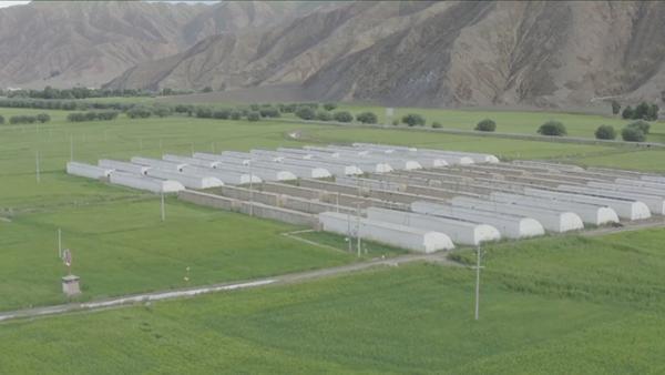 西藏年楚河畔:4000米之上的瓜果粮仓