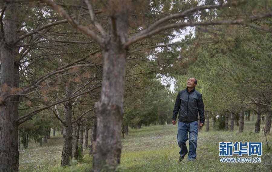 陕西榆林齐军祥:二十年绿化一座荒山