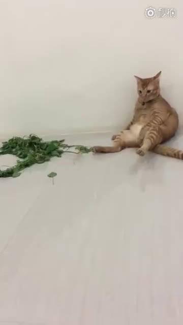 猫薄荷吸多了!!!有点懵!!!