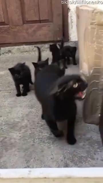 孩子不小心摔了吓着了,猫妈马上冲过来责骂猫爹 ……