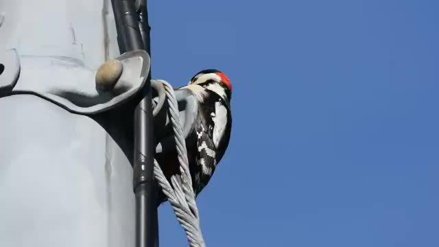 啄木鸟:今天这树干有点硬啊,脑瓜子嗡嗡的!
