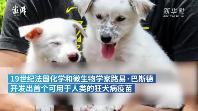 世界狂犬病日:希望这一传染病成为历史
