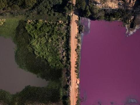 """的,巴拉圭泻湖变更""""紫色"""""""