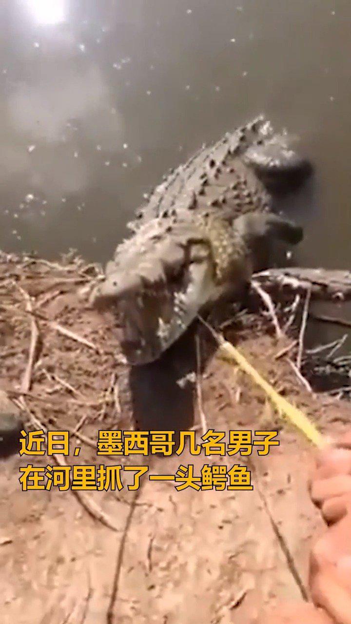 墨西哥男子非法抓捕鳄鱼,还骑在鳄鱼身上开摩托!