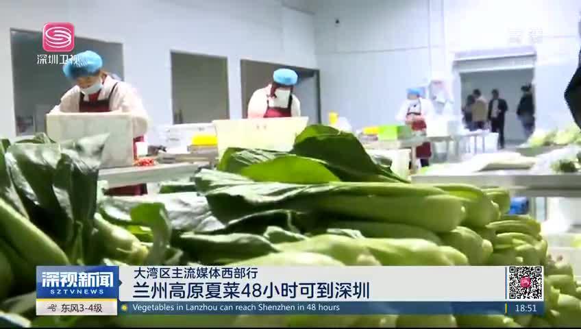 大湾区主流媒体西部行 兰州高原夏菜48小时可到深圳