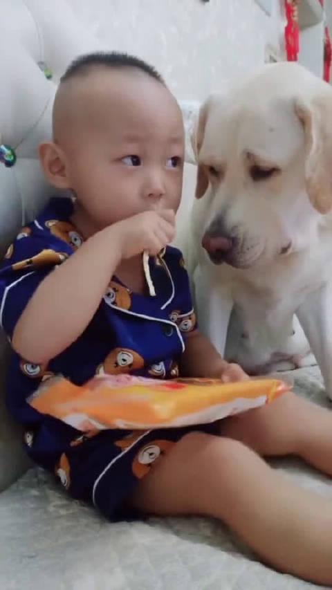 狗狗想吃零食,可怜的眼神