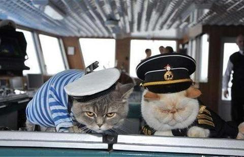 猫咪上舰艇:除了消除鼠患以外,还有缓减舰员心理作用