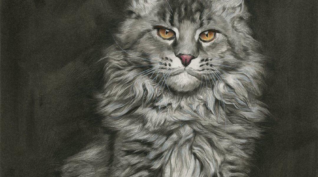 刘斌老师20200924精微动物素描《猫》步骤图
