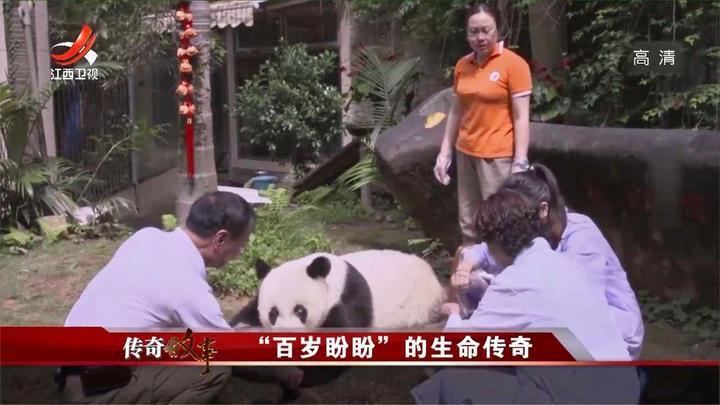 在男子精心照料下,大熊猫巴斯活了很久,带着荣耀去世