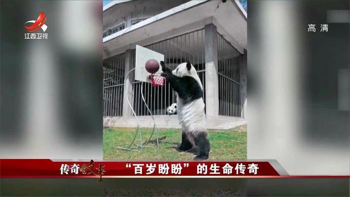 大熊猫巴斯很受欢迎,但随时间流逝,开始有了很多疾病
