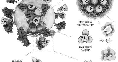 张伯礼、施一公、李兰娟齐点赞 新冠病毒完整结构图到底多牛