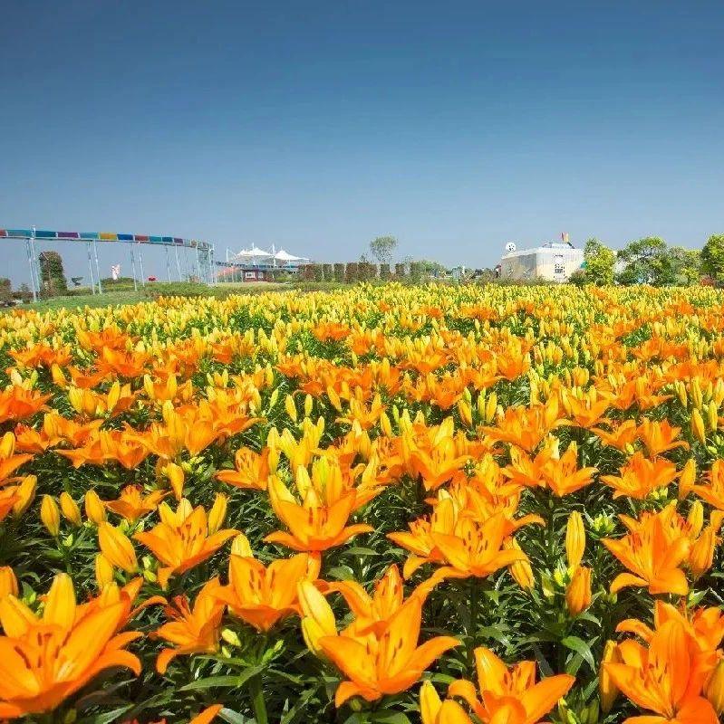 不限量!花仙子门票免费送!百合节、葵花节、北极光之夜都来了!