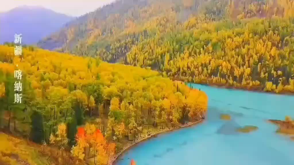 沿喀纳斯河一路漫步,欣赏西伯利亚落叶松原始森林、白桦林风景……
