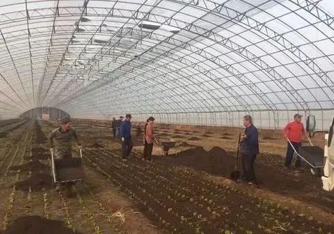 建立有机肥推广激励专项资金和出台有机肥施用补贴政策