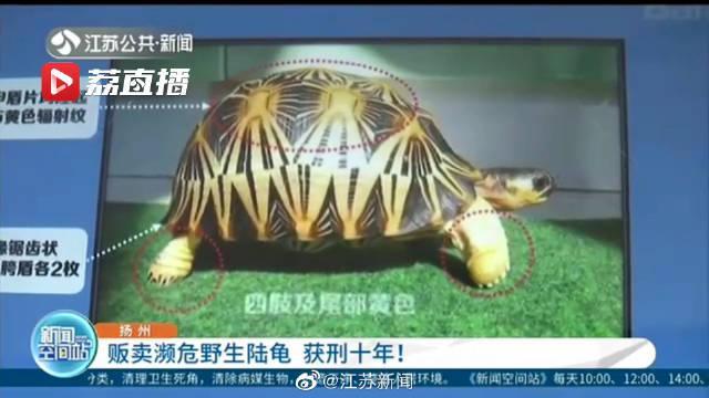 扬州 男子贩卖濒危野生陆龟获刑10年