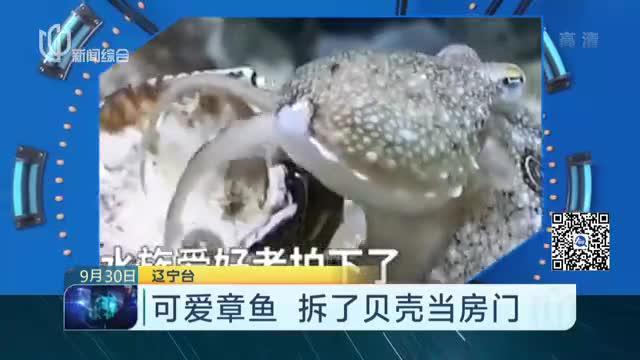 可爱章鱼  拆了贝壳当房门