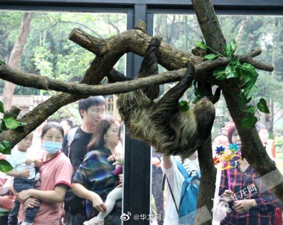 """萌翻了!假期来重庆动物园看""""闪电侠""""重庆分侠吧"""