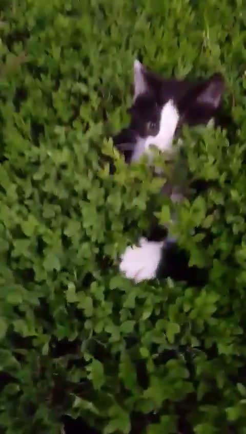原来这才叫做躲猫猫,看清一共有几只喵星人了嘛?