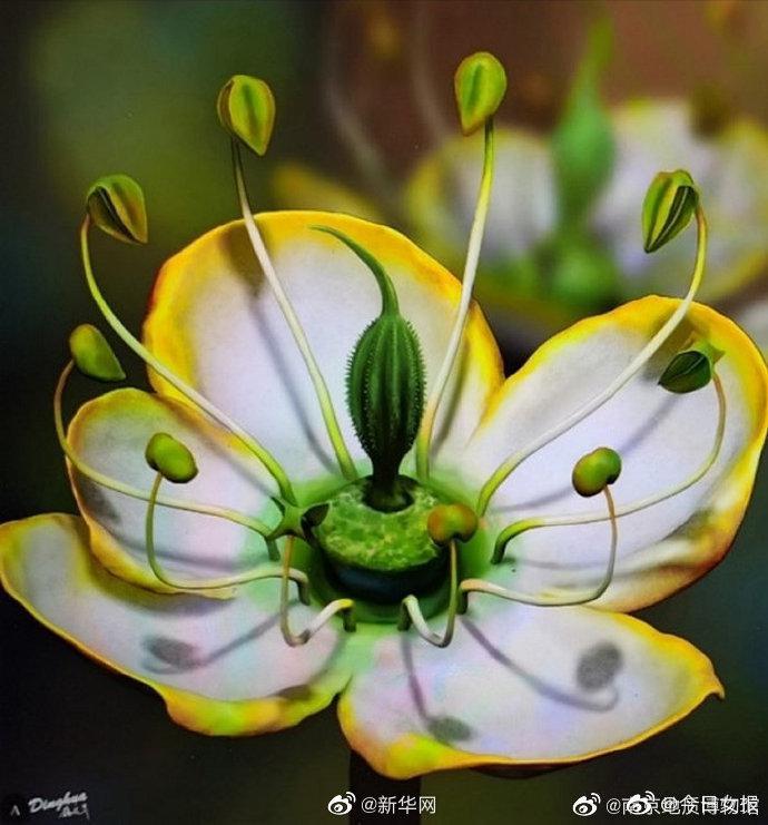 古生物学家发现1500万年前奇特花朵