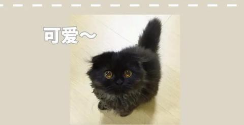 看了这只小黑猫的颜,你还敢说黑猫丑吗?
