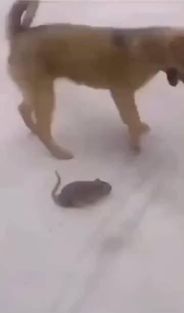 老鼠:你大爷的,你把我当鼠标垫啊
